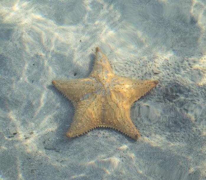 estrella de mar acuario gijon
